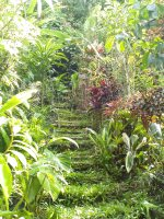 Paths lead to different areas to enjoy the view, the plants and some birds